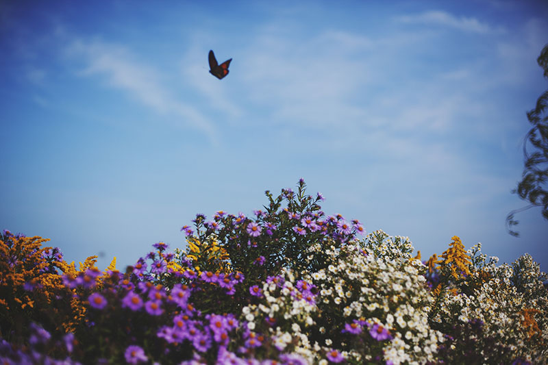 colourful picture of butterfly