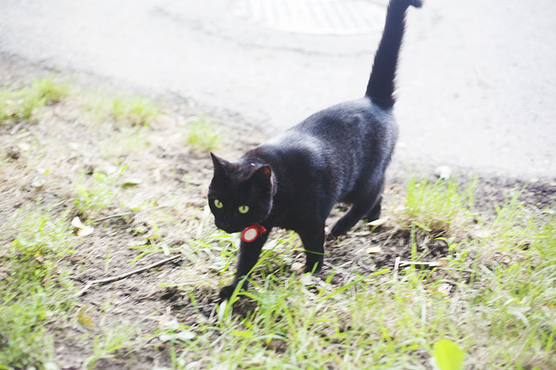 black-cat-red-collar