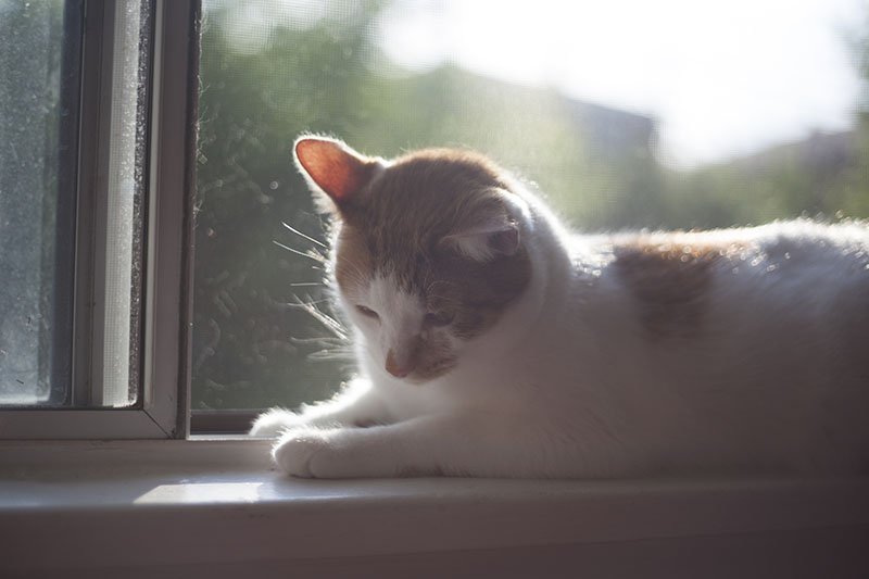 cute-cat-on-the-window-sill