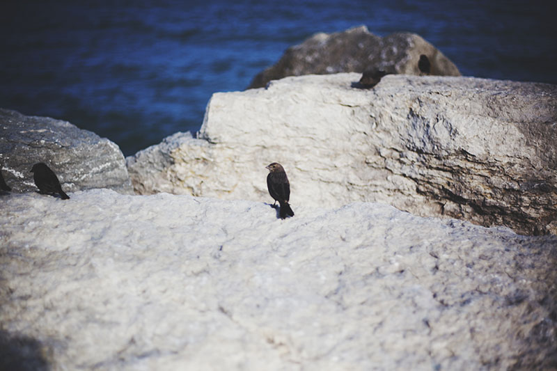 bird-on-a-rock