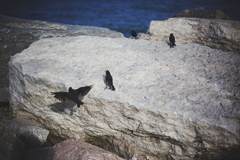 birds-playing-on-rock