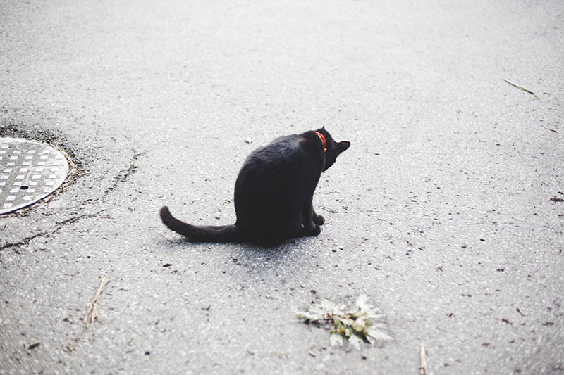 black-cat-from-behind