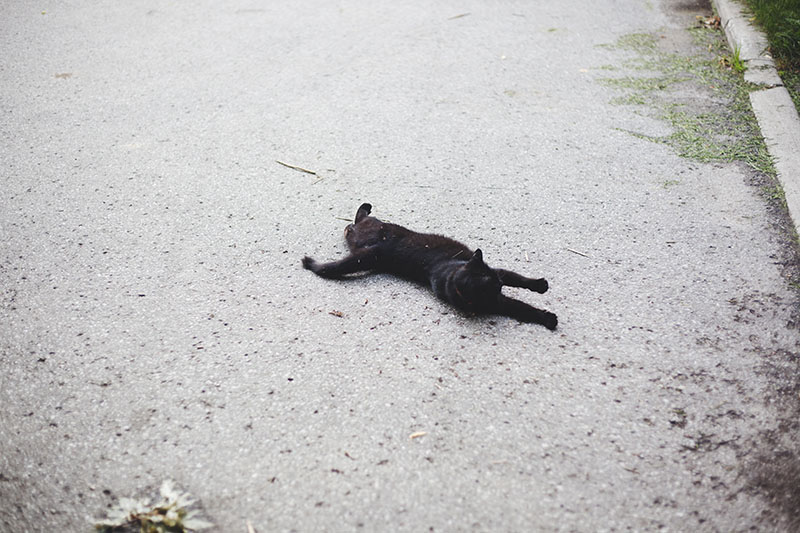 black-cat-sprawled-on-street