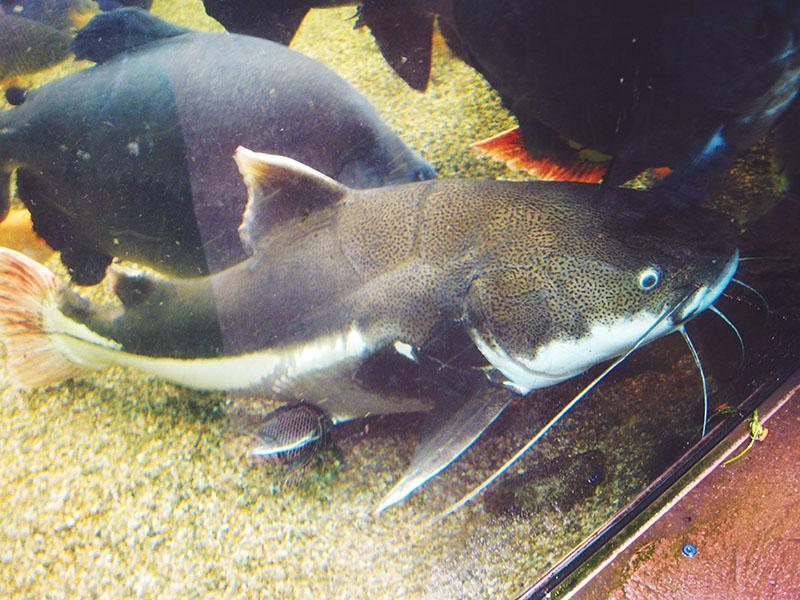 fish-at-biodome