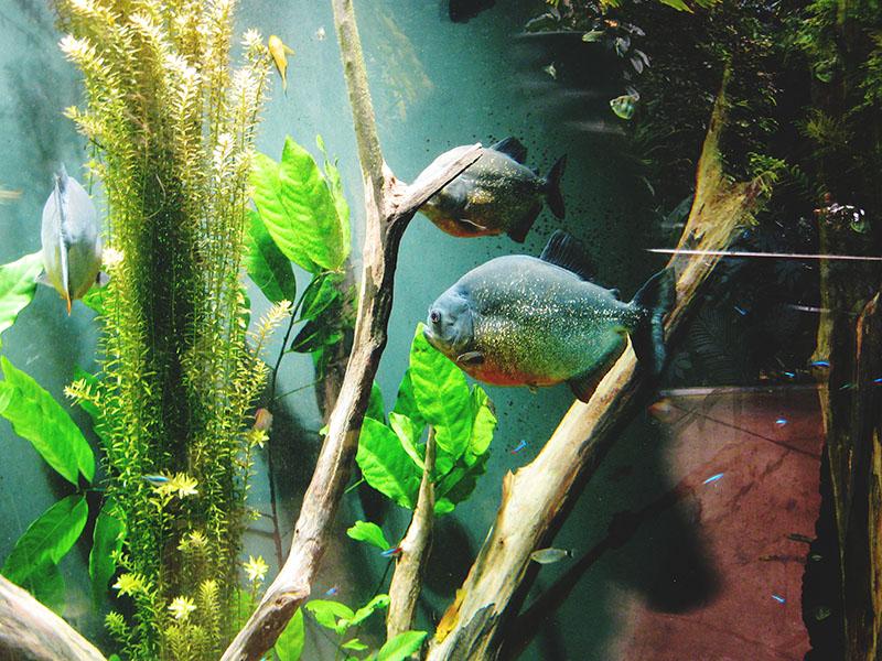 fish-at-montreal-biodome