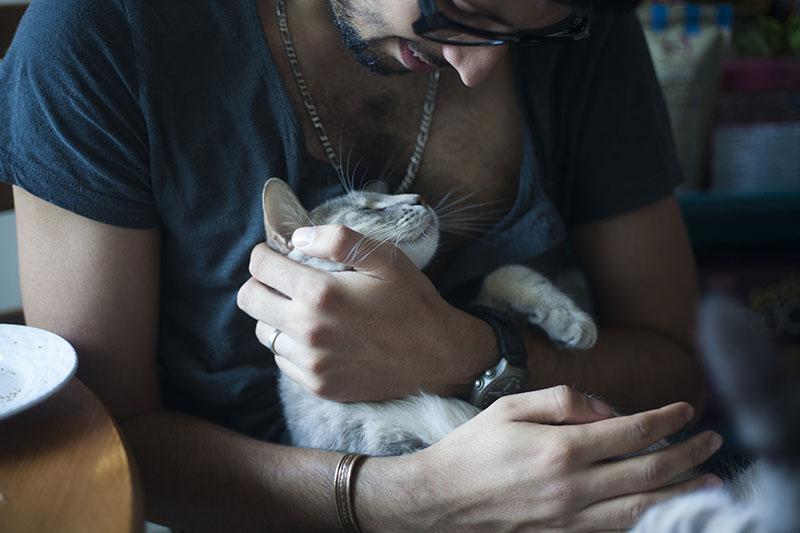 hugging-kitty-cat