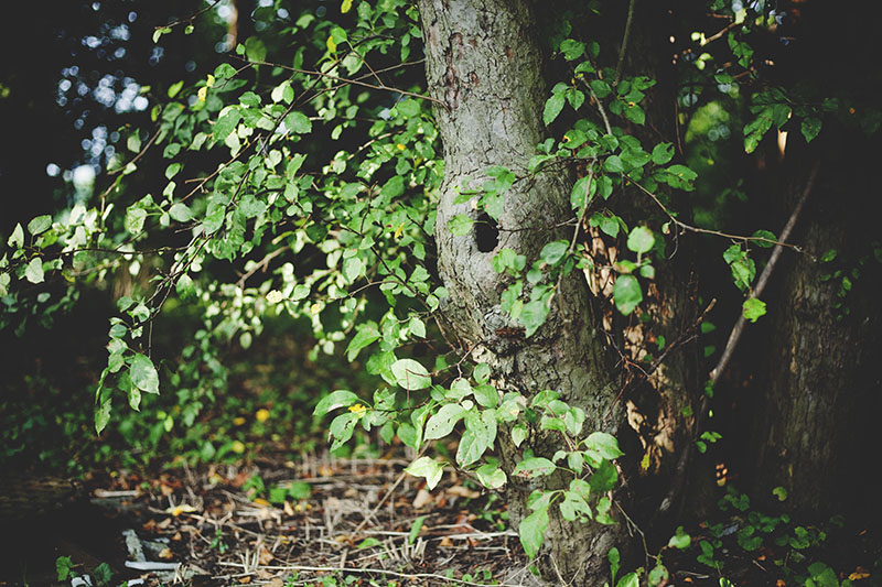 nature-photograph-tree-with-hole