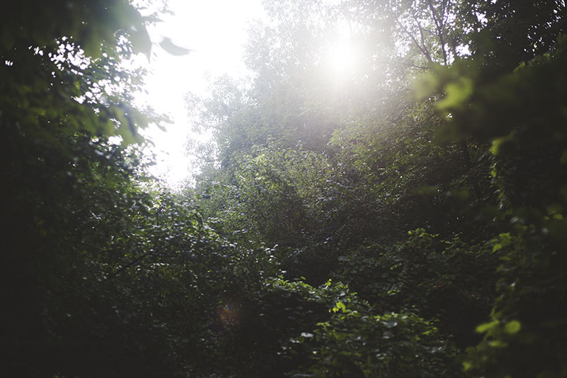 nature-photography-sun-through-trees