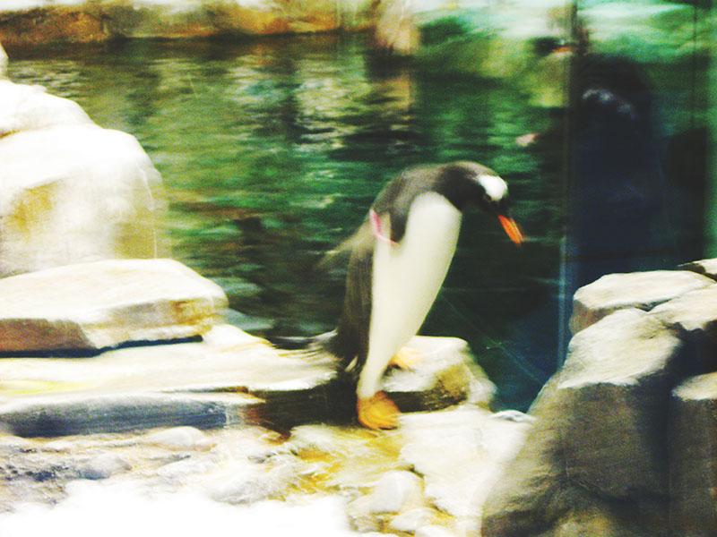 penguin-at-biodome