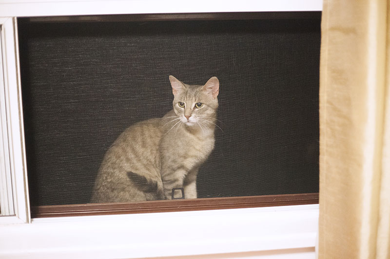 stray-cat-at-window