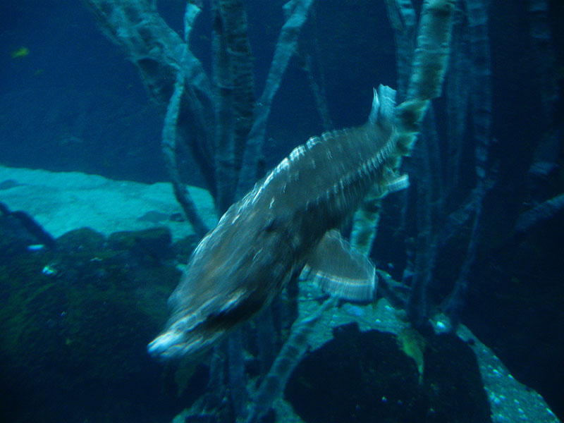 under-water-biodome-montreal