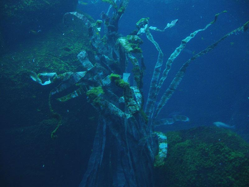 underwater-plant-biodome