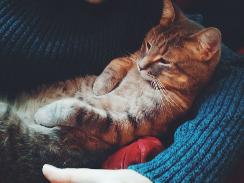 cat-sleeping-pictures-elise-thomas-xavier