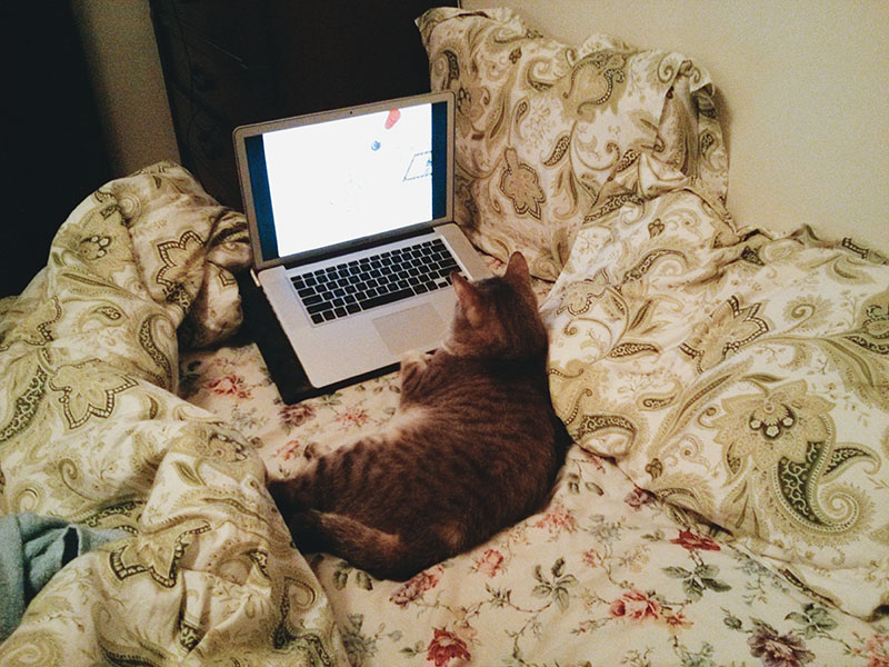 cat-watching-youtube-videos-on-mac-laptop
