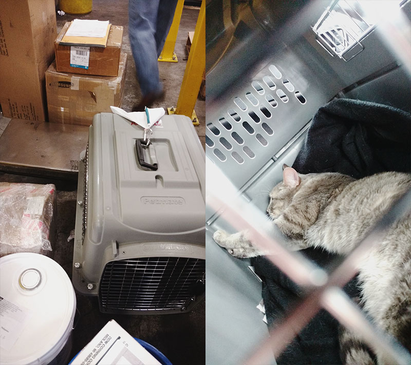 The Flight from Toronto to London With a Cat in Cargo