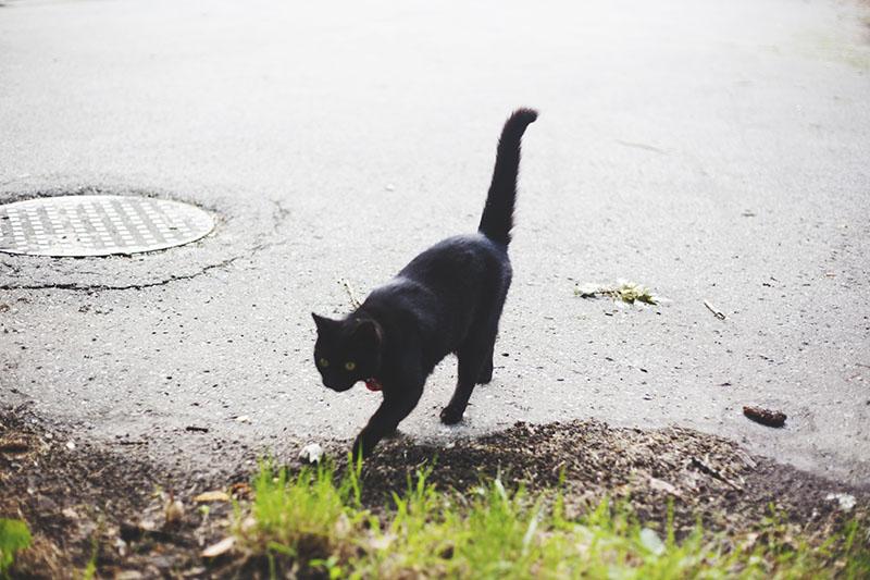 black-cat-prancing-along