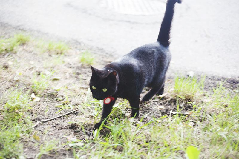black-cat-red-collar