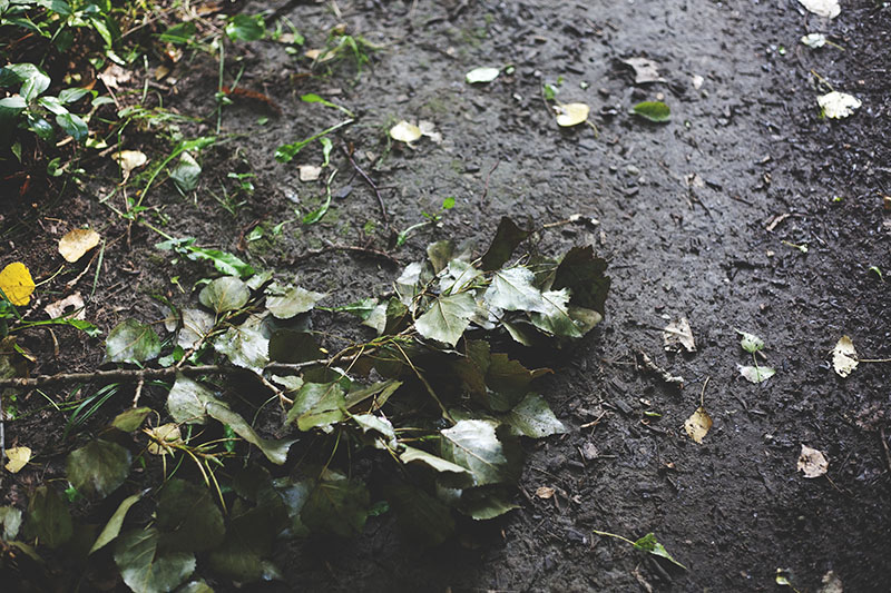 nature-photography-leaves-on-ground