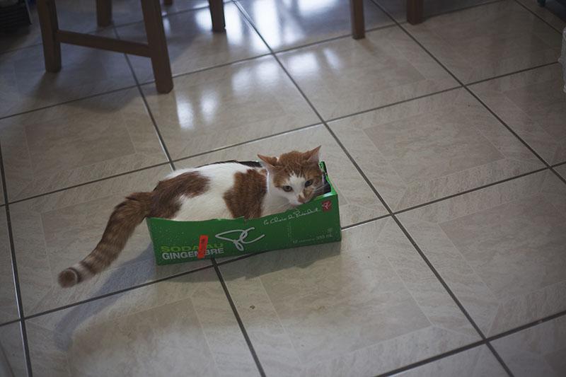 big-cat-in-a-tiny-box