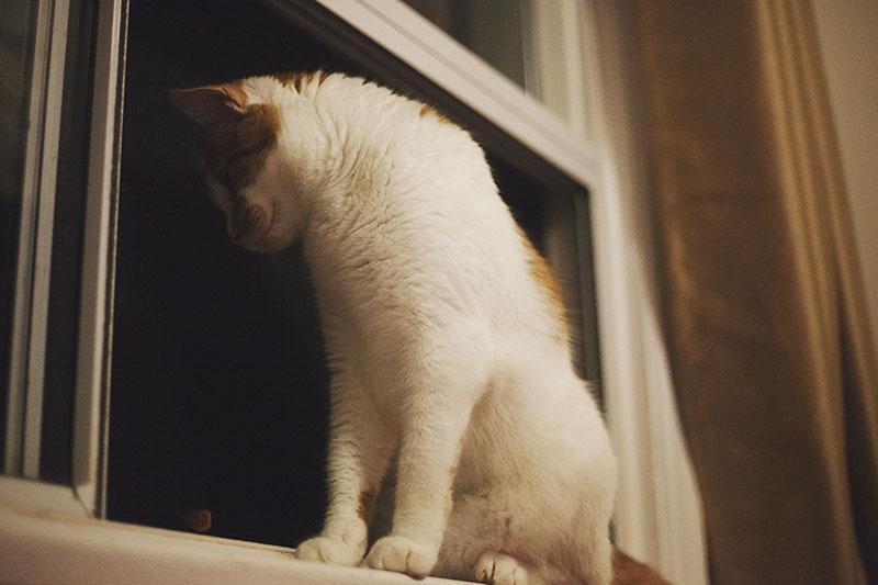 cat-fell-in-love