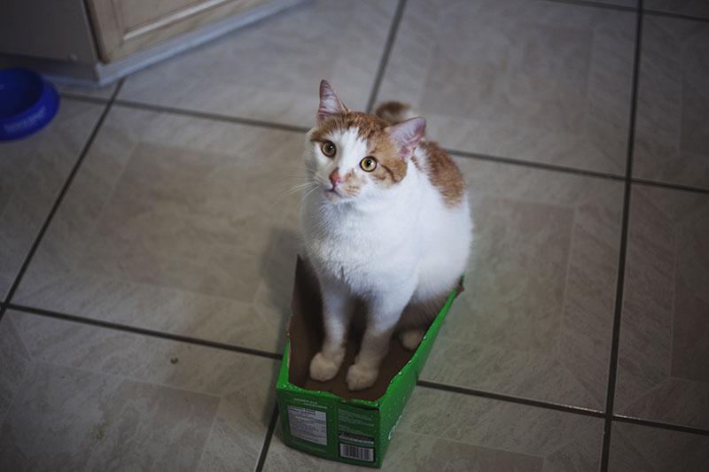 cat-in-box-success