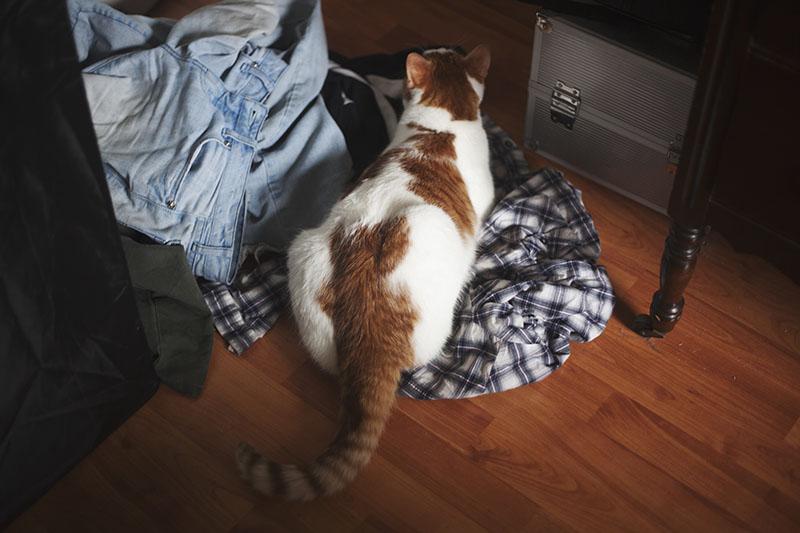 cat-in-laundry-pile