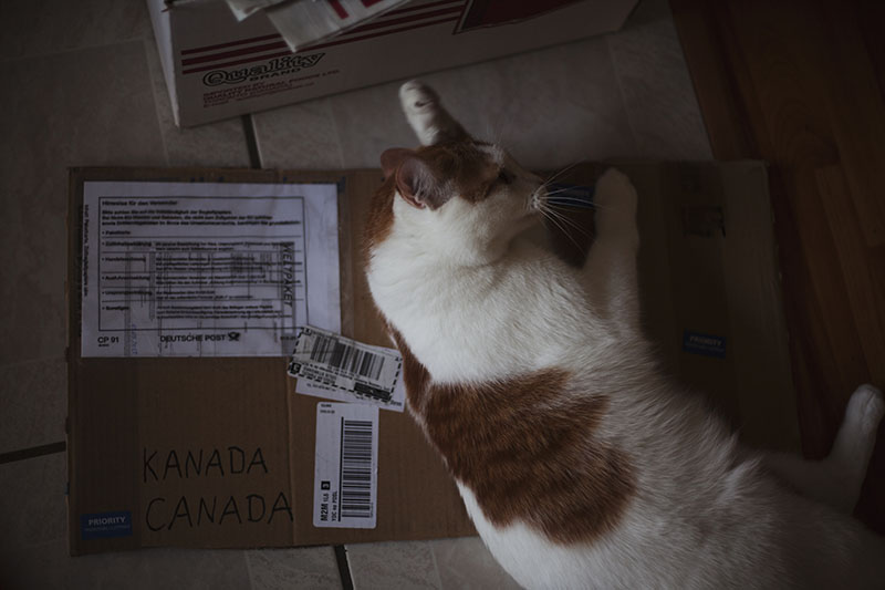 cat-lying-on-cardboard