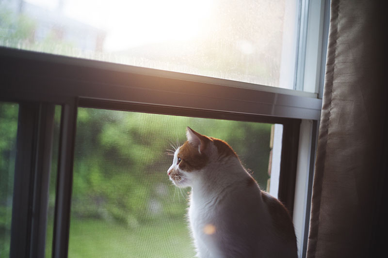 cat-sitting-at-the-window