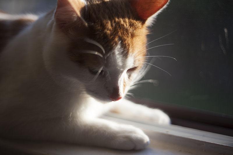 cat-sitting-on-sill