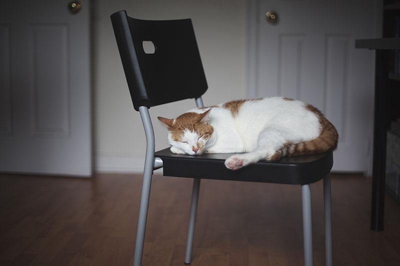 cat-sleeping-on-chair