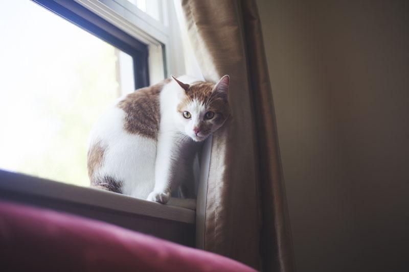 sneeky-cat