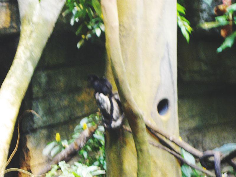 baby-monkey-biodome