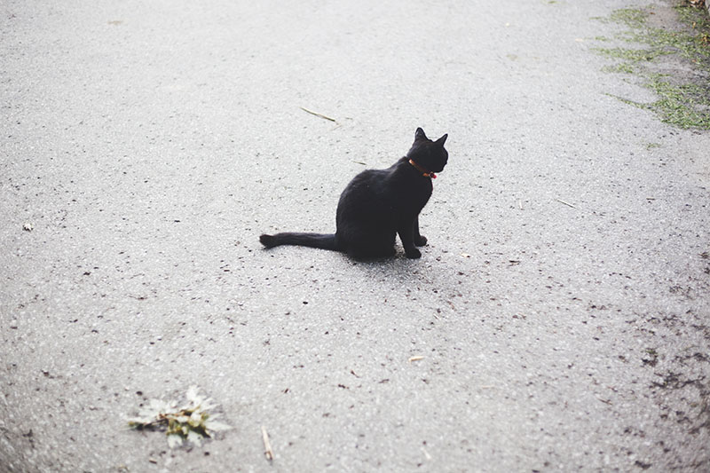 black-cat-on-street