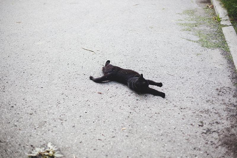 black-cat-sprawled-on-street