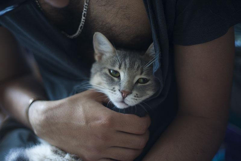 cat-hiding-in-shirt