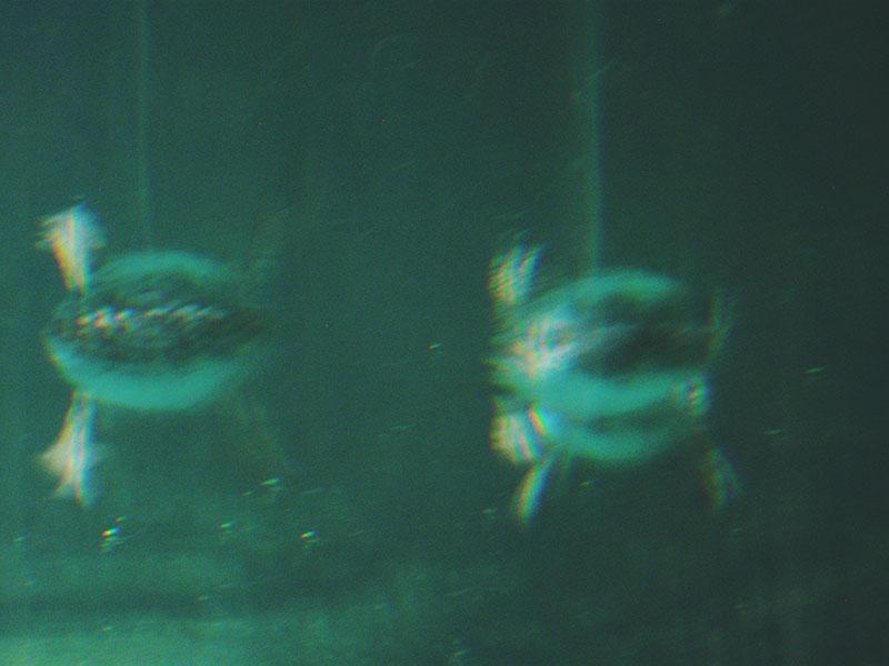 duck-feet-under-water-abstract