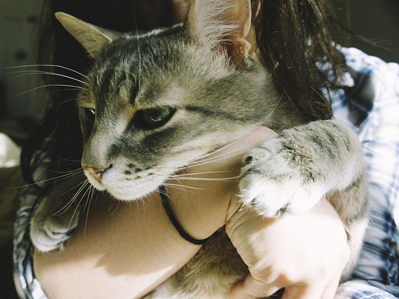 kitty-cat-avery
