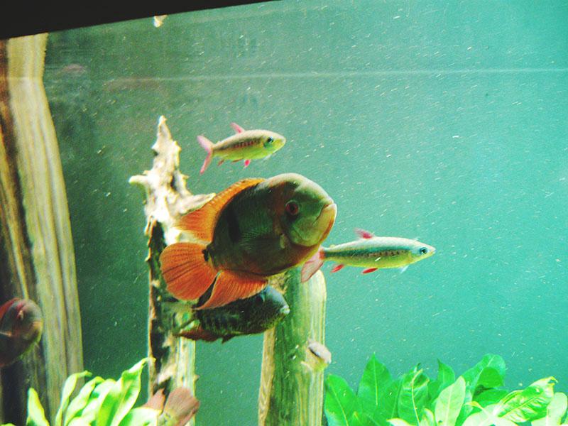 more-fish-at-biodome