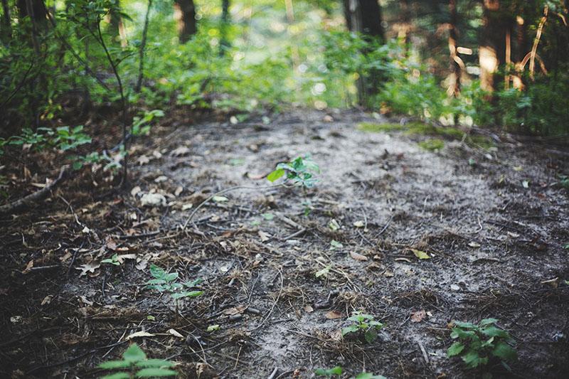 nature-photograph-ground