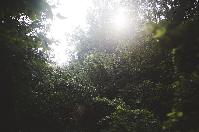 nature-photography-sun-through-trees