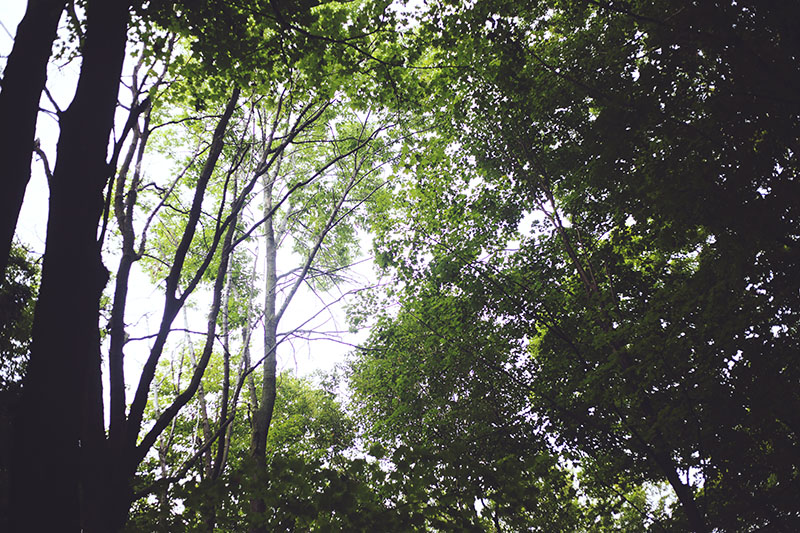 nature-photography-trees-above