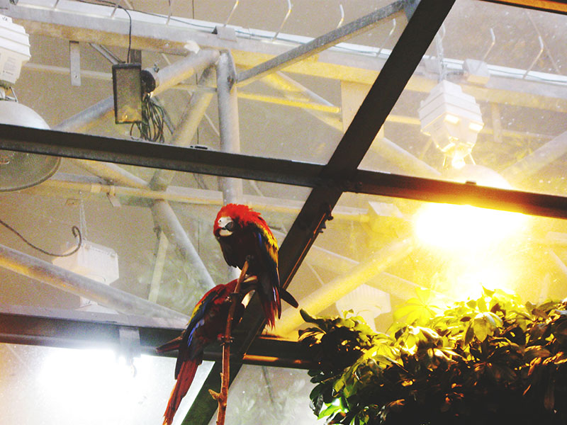 parrots-at-biodome
