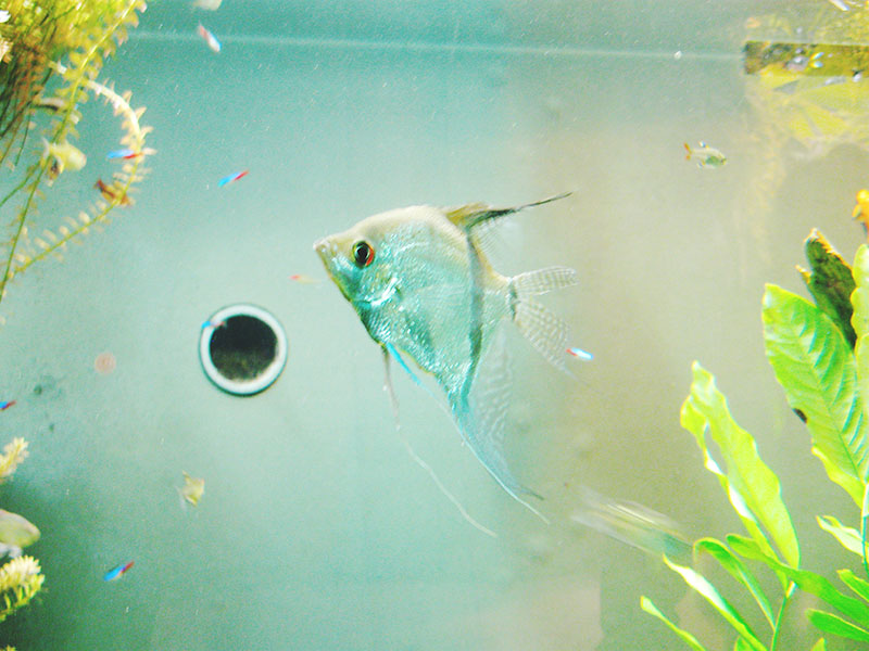 small-fish-at-montreal-biodome