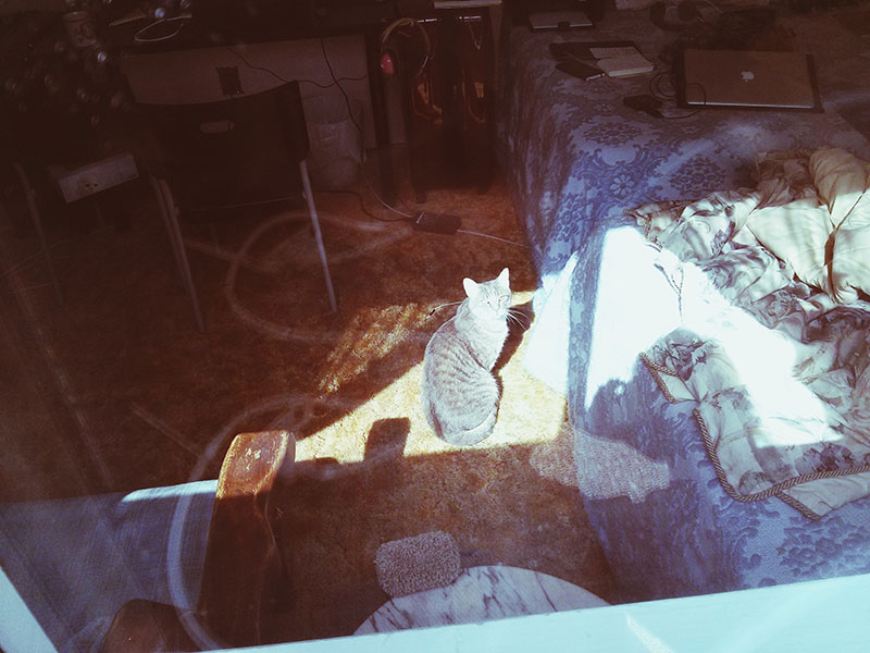 adorable-cat-through-window-picture