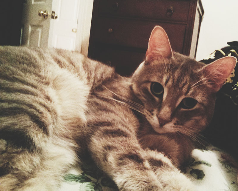 cute-cat-phone-pictures-avery