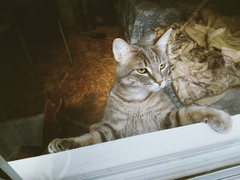 elise-and-thomas-pet-cat-avery-pictures