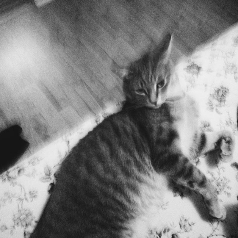 elise-and-thomas-pet-cat-avery
