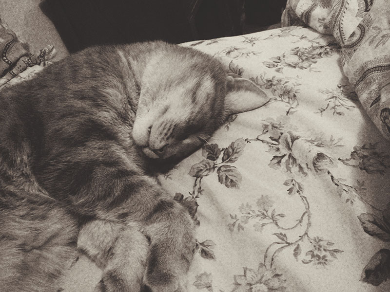 elise-xavier-phone-pictures-sleeping-cat