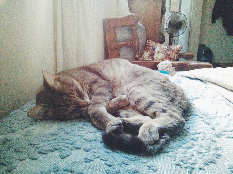pet-pictures-avery-sleeping-cute-cat
