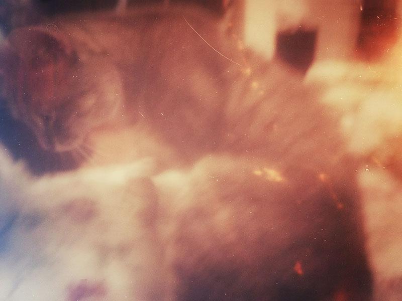 phone-camera-picture-avery-pet-cat